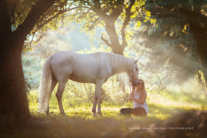 Equine Photo Workshops