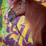Pferdefotografie, Pferdefotokurs, Pferdefotoworkshop, Pferdefotograf