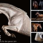 Pferdefotokalender, Pferdekalender, Pferdefotografie, Pferdefotograf, Pferdefotos, schöne Pferde, Pferdegeschenk, Pferdekunst