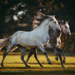 Workshop, Workshops, Fotokurs, Pferdefotoworkshop, Pferdefotografie, Pferdefotograf