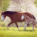 Paint-Horse; Schecke; Trab; Galopp; Mutter; Stute; Fohlen;; Pferdefotograf; Pferdefotografie; Pferd; Pony; Horse; Equus; Equestrian; Equine; photography; photographer; animal; Pferdefotoworkshop; Pferdefotografieworkshop; Workshop; Fotoworkshop
