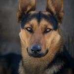 Hund, Hundefotografie, Hundefotograf, Straßenhund, Portrait, Tierfotograf, Tierfotografie