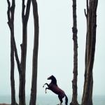 Warmblut; Steigen, Wald, Meer; Pferdefotograf; Pferdefotografie; Pferd; Pony; Horse; Equus; Equestrian; Equine; photography; photographer; animal; Pferdefotoworkshop; Pferdefotografieworkshop; Workshop; Fotoworkshop