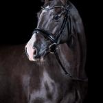 Pferdefotografie, Studio, fine-art, Kunst, Equine, Art, Pferd, Pony, Rappe, Pferdefotograf