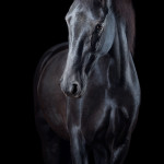 Rappe, PRE, Pura Raza Espanola; Pferd; Pferde; Pferdefotograf; Pferdefotografie; horse; photography; Equestrian; Equine; equus