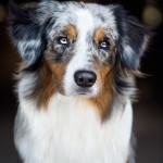 Hund, Hundefotografie, Hunde