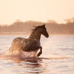 Fotoshooting Am Strand mit Ihrem Pferd, Meer, Ostsee, Strand, Pferd, Pferde, Pferdefotoshooting, Pferdefotograf, Pferdefotografie,  Wasser