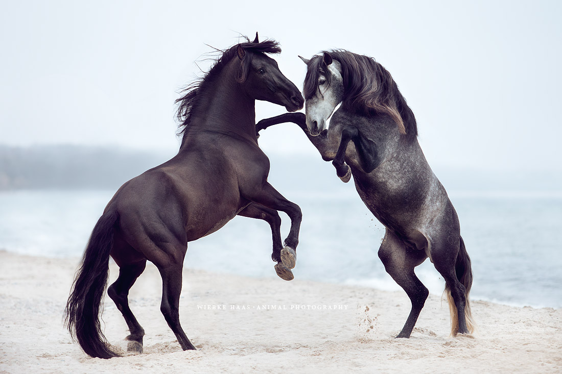 Willkommen 2017 Wiebke Haas 183 Animal Photography
