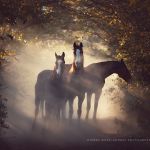 Warmblut; Herde; Morgenlicht; Ecuador; Pferdefotograf; Pferdefotografie; Pferd; Pony; Horse; Equus; Equestrian; Equine; photography; photographer; animal; Pferdefotoworkshop; Pferdefotografieworkshop; Workshop; Fotoworkshop