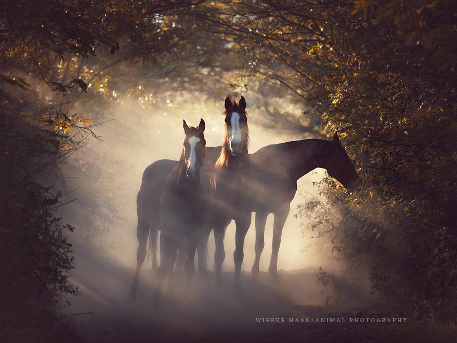 Pferdefotografie Warmblüter