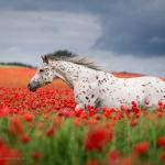 Fine-Art; Pferdefotograf; Pferdefotografie; Pferd; Pony; Horse; Equus; Equestrian; Equine; photography; photographer; animal; Pferdefotoworkshop; Pferdefotografieworkshop; Workshop; Fotoworkshop