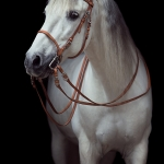 PRE; Schritt; Mähne; Schimmel; Hengst; Weide; Pferdefotograf; Pferdefotografie; Pferd; Pony; Horse; Equus; Equestrian; Equine; photography; photographer; animal; Pferdefotoworkshop; Pferdefotografieworkshop; Workshop; Fotoworkshop