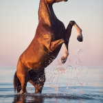 Pferd, Warmblut, steigen, Brauner, Pferdefotograf, Pferdefotografie, Pferdefotoworkshop, Workshop, Fotoworkshop, Strand, Meer, Ostsee, horse, photo, photography, equus, equine