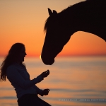 Pferd, Warmblut, Wasser, Brauner, Pferdefotograf, Pferdefotografie, Pferdefotoworkshop, Workshop, Fotoworkshop, Strand, Meer, Ostsee, horse, photo, photography, equus, equine