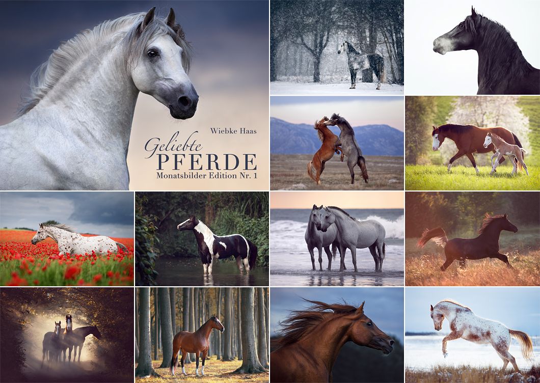 Monatsbilder: Geliebte Pferde jetzt verfügbar | Wiebke Haas · Animal ...