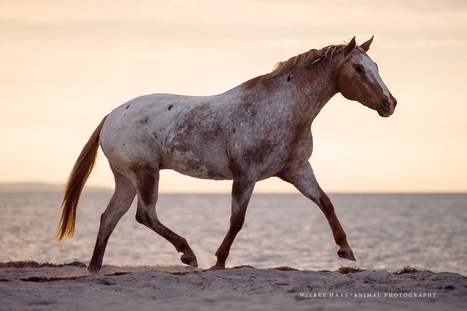 animal, equine, equus, fine art, horse, horse photography, Pferd, Pferde, Pferdefoto, Pferdefotograf, Pferdefotografie, photography, Tierfotograf, Tierfotografie, Fotokurs, Workshop, Pferdefotoworkshop