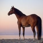 Fotoshooting Am Strand mit Ihrem Pferd, Meer, Ostsee, Strand, Pferd, Pferde, Pferdefotoshooting, Pferdefotograf, Pferdefotografie, Warmblut, Wasser