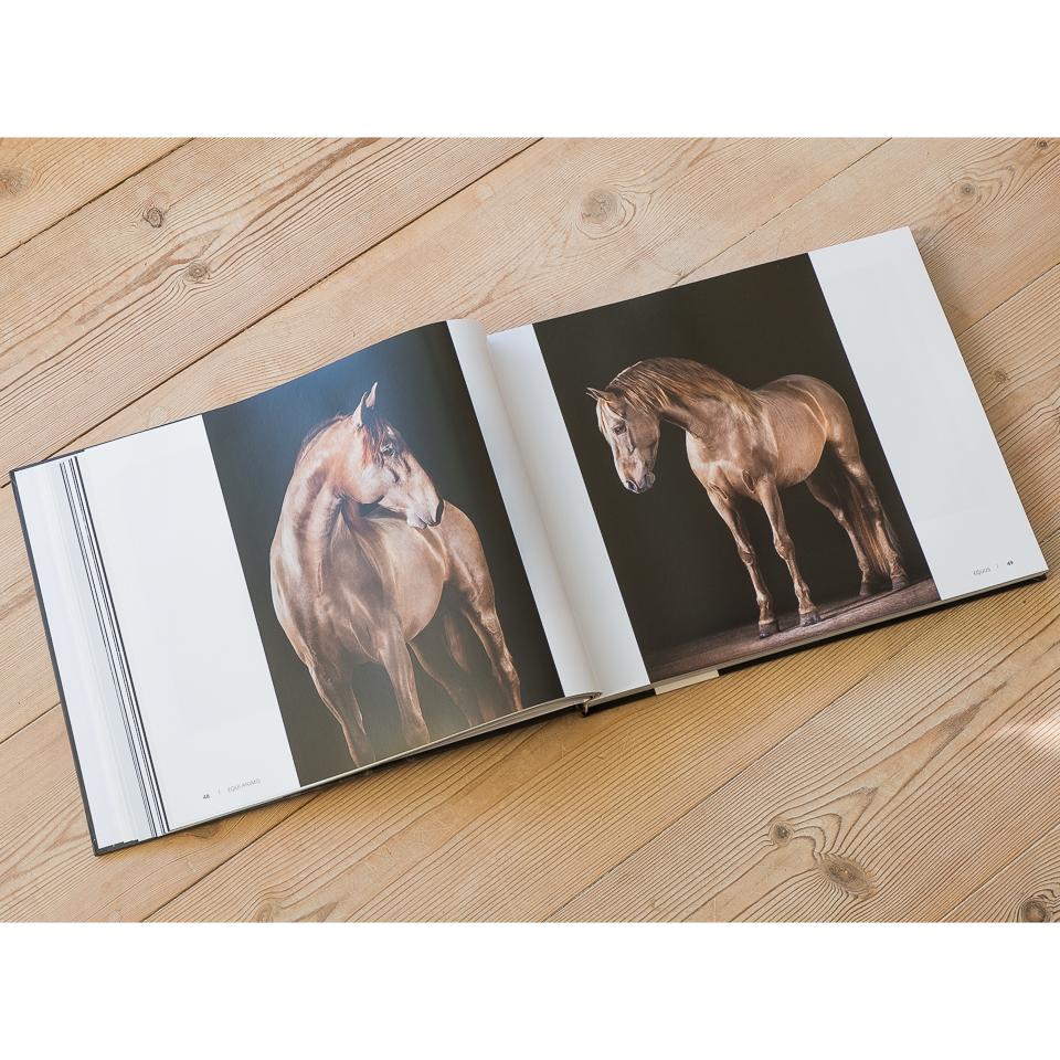 """Im Kapitel """"Equus"""" gibt es meine besten Studiobilder von Pferden zu sehen."""