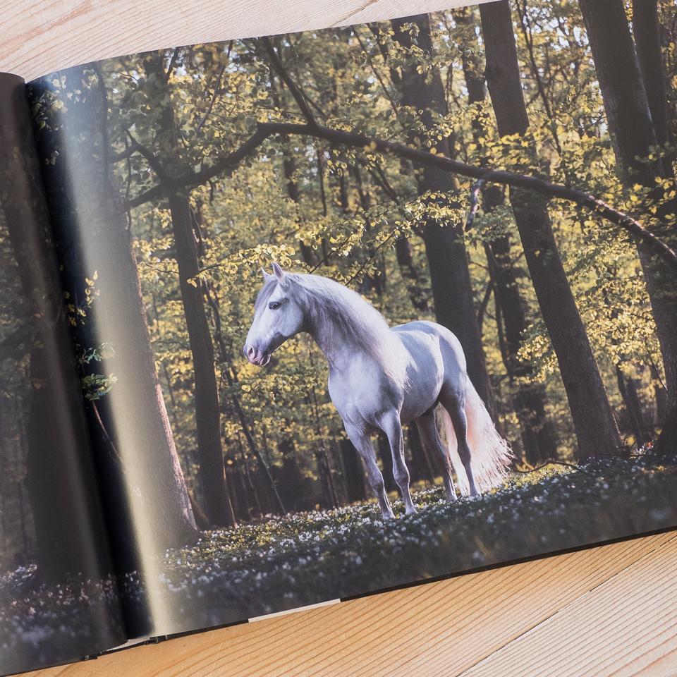 Im Kapitel Hoofbeats zeige ich die schönsten Outdooraufnahmen von Pferden.