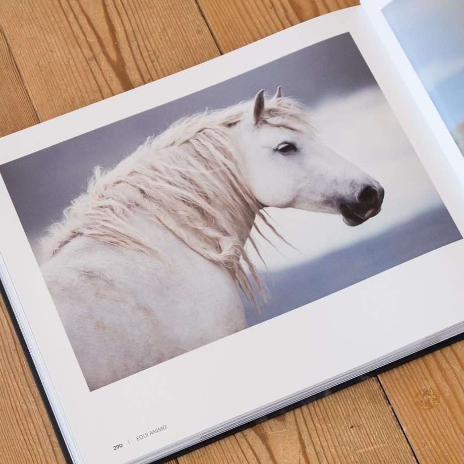 """Im Kapitel """"Wild Things"""" sind meine besten Wildpferdfotos aus Bosnien zusammen gestellt."""